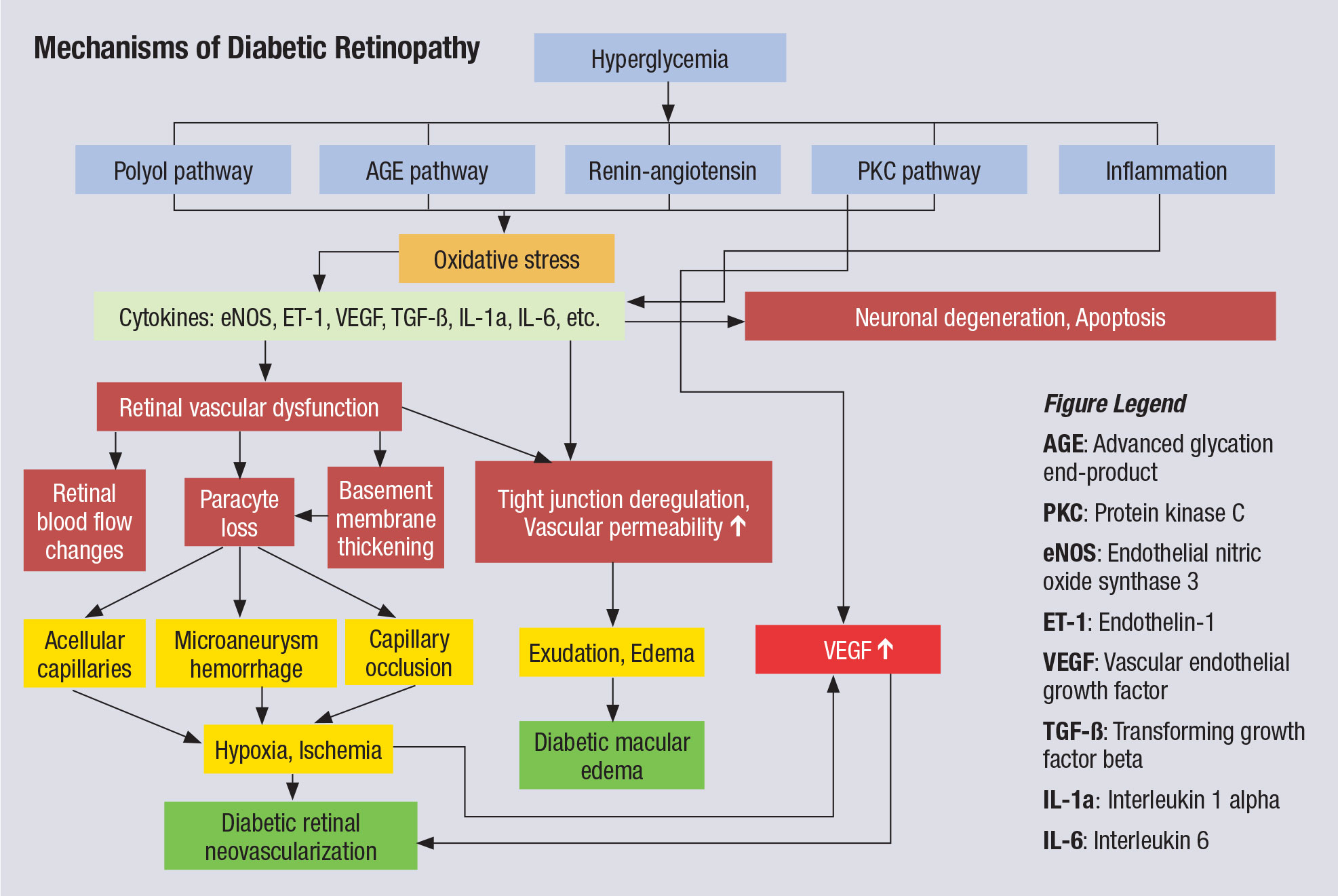 This chart illustrates the complex pathophysiology of DR. Note that VEGF elevation happens fairly late in the cascade and directly before neovascularization, which partly explains why anti-VEGF therapy must be maintained indefinitely. Other interventions, especially those that might blunt activity further upstream from VEGF, could have more long-lasting impact.